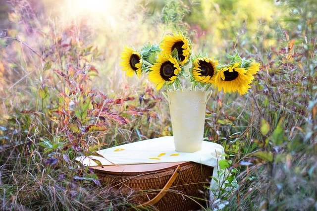 Slunečnice v zahradě