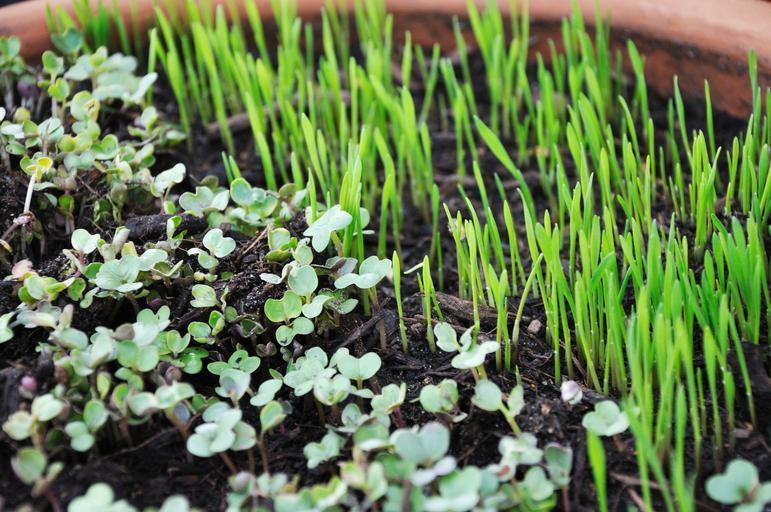 semenáčky různých rostlin